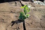 plant in rock