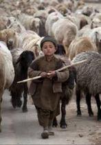 childshepherd