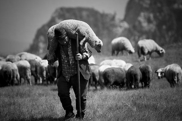 Jesus Leadership Style Principles Shepherdship Shepherd Sheep